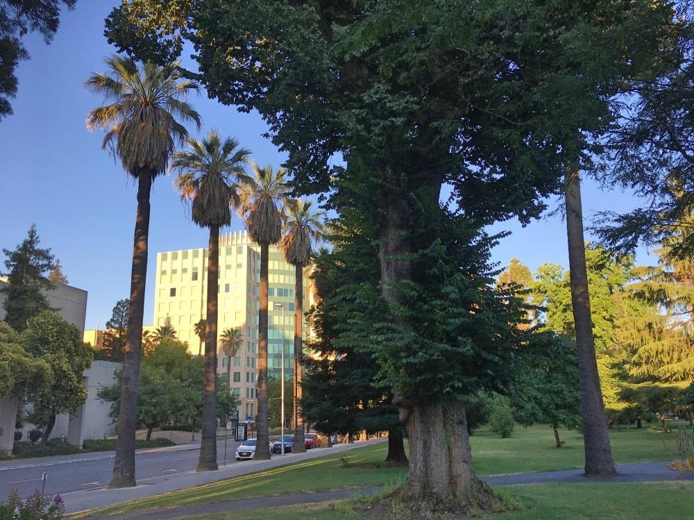 Capitol Park w Sacramento