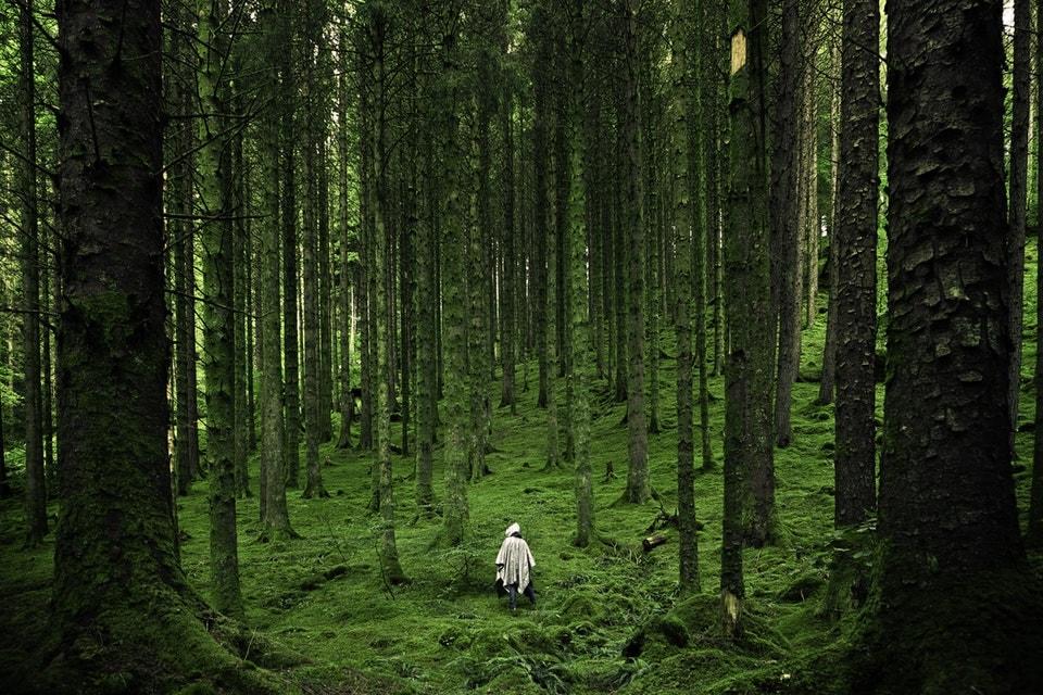 Filmowanie w lesie